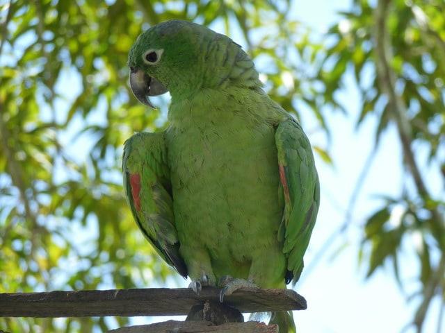 Попугай в Южной Америке